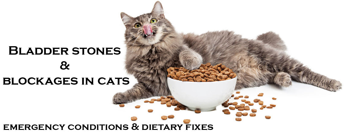 Bladder stones & Blockages in cats: Emergency condition & Dietary fixes