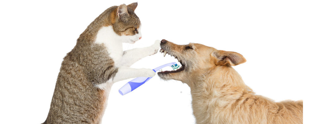 How brushing your pets teeth could save their life