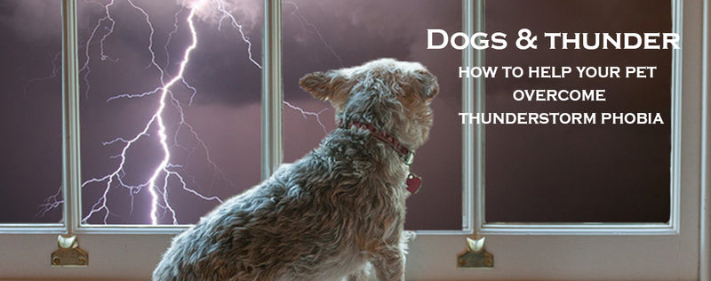 Dogs & thunder: How to help your pet overcome thunderstorm phobia