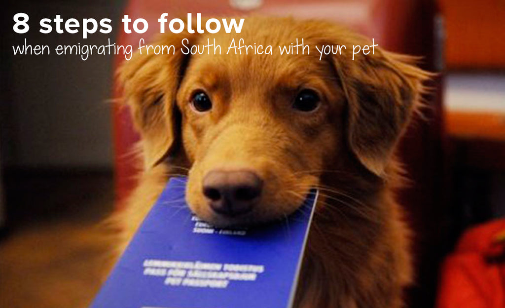 Emigrating with pets? Here are 8 steps to follow when leaving South Africa