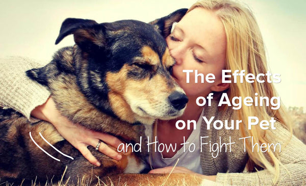 The Effects Of Ageing On Your Pet And How To Fight Them