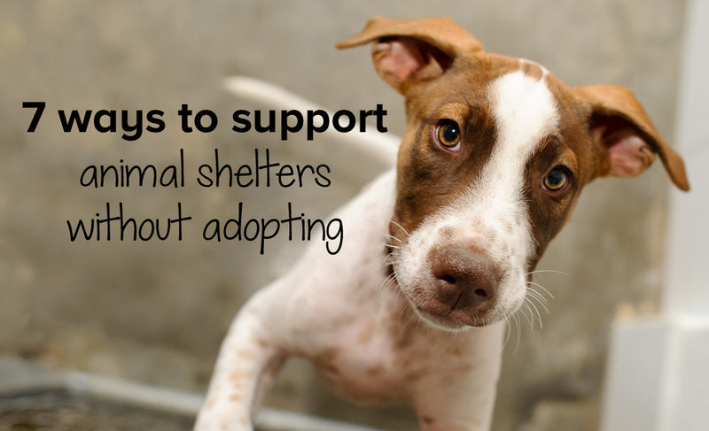 7 ways to support animal shelters without adopting