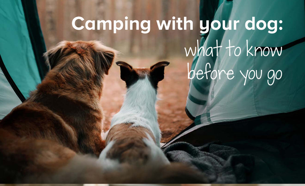 Camping with your dog: what to know before you go