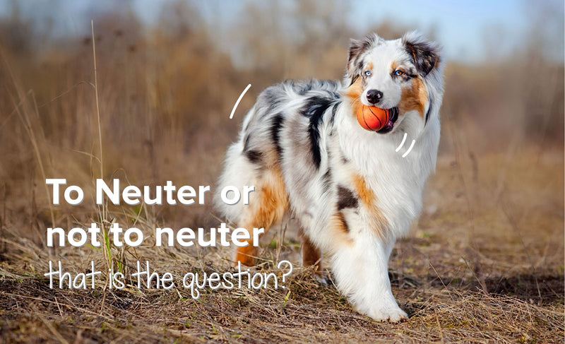 To Neuter Or Not To Neuter That Is The Question?