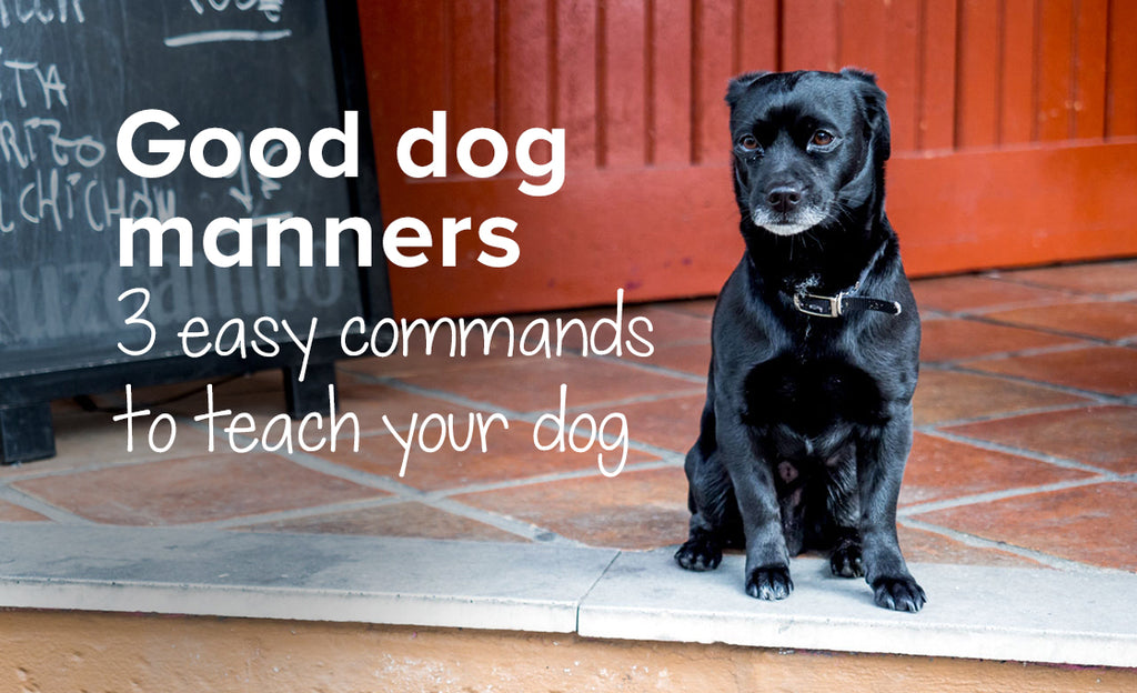 3 Easy commands to teach your dog