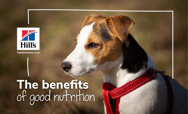 The Benefits Of Good Nutrition For Your Dog