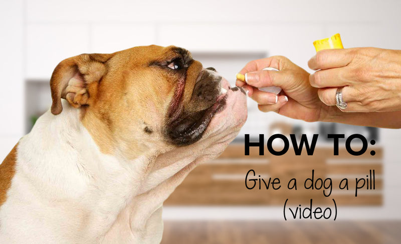 How to give a pill to a dog | Easy way to give a dog a pill