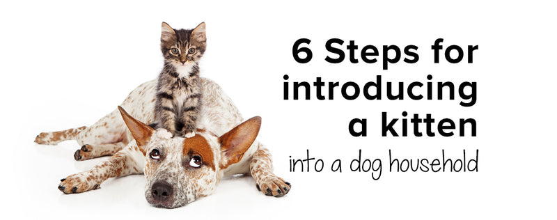 6 Steps for introducing a kitten into a dog household