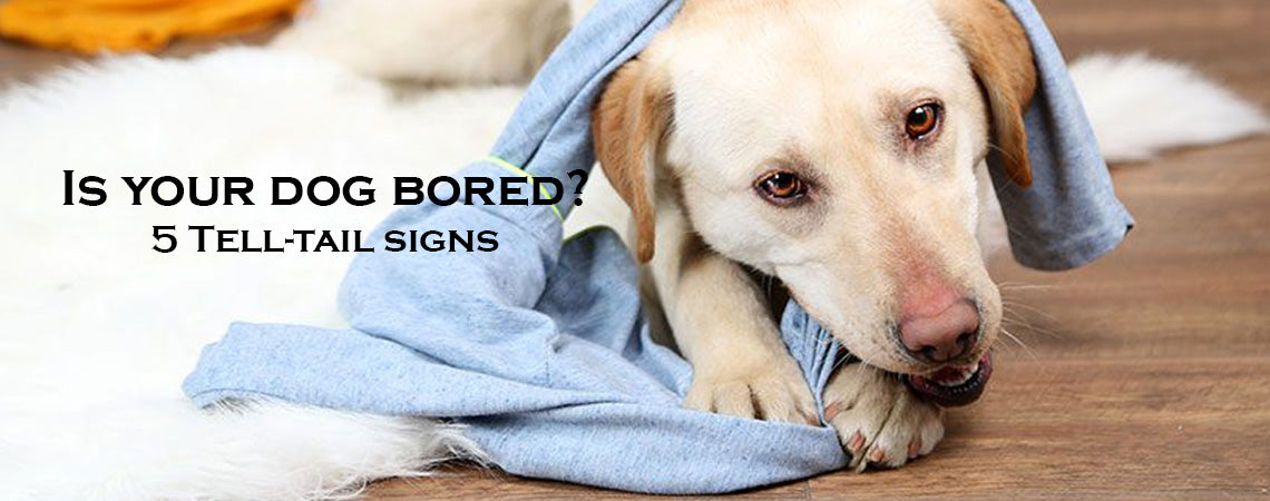 5 Tell-Tail sign that your dogs is bored (and what you can do to help)