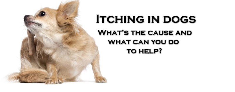 What causes Itching  in dogs, and what you can do to help