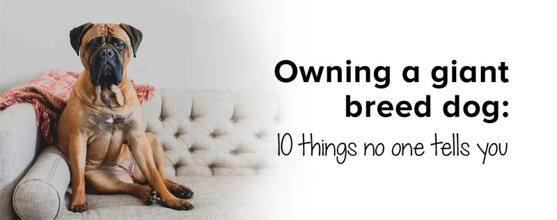 Owning a giant breed dog: 10 things no one tells you