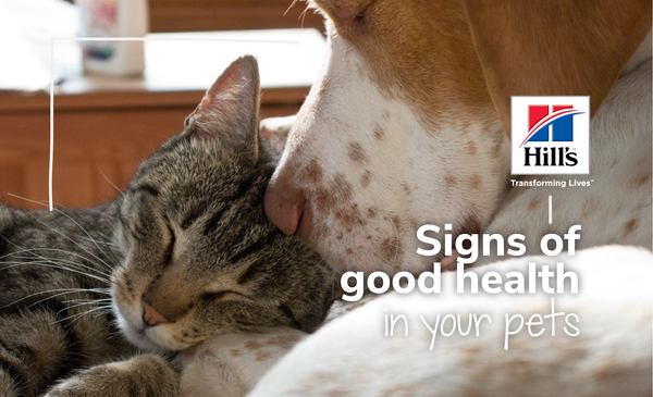 What Are The Signs Of Good Health And Nutrition In Your Pets?