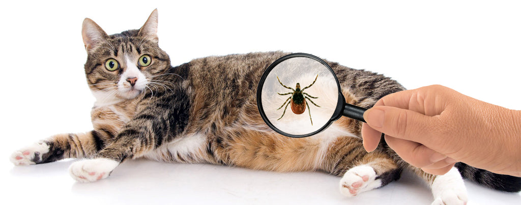 You're doing it wrong: Tick control for cats