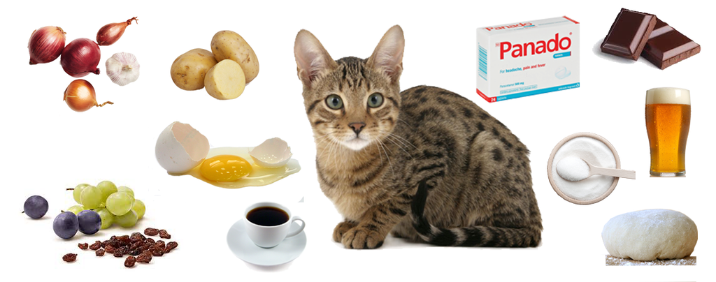 10 Foods you should never feed your cat