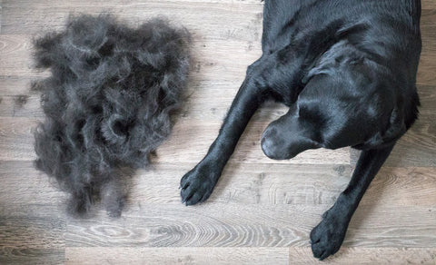 dog_shedding