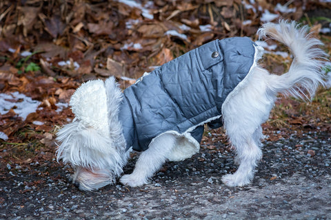 dog_wearing_jacket