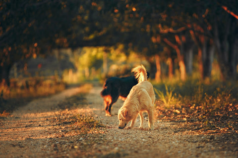 dogs_sniffing_road