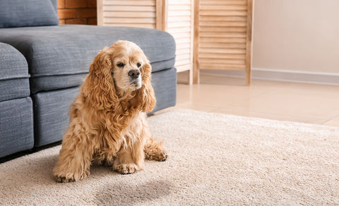 dog_on_carpet