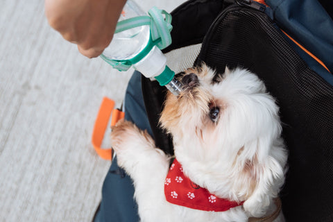 dog_drinking_water_from_a_green_bottle