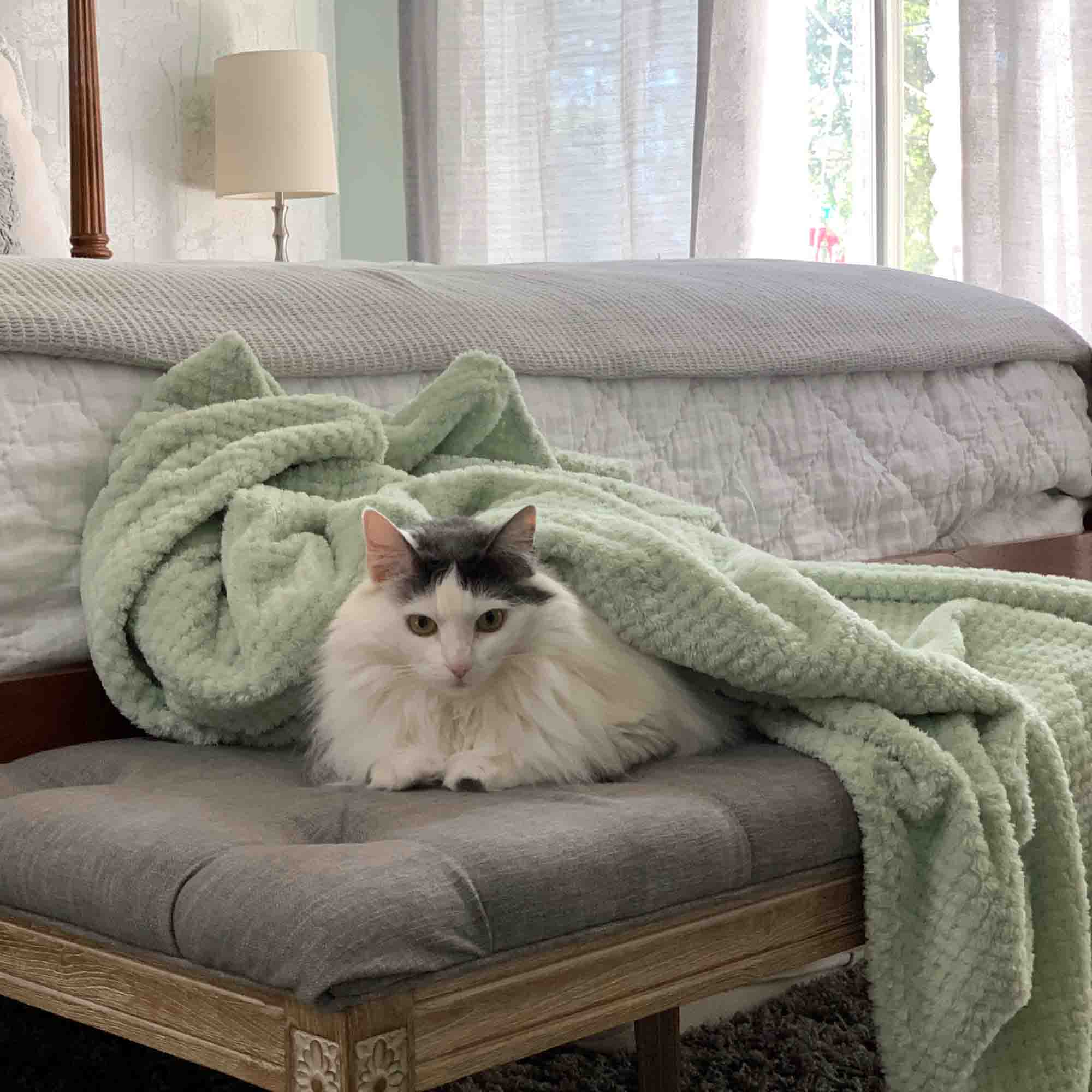 White and gray cat laying on a bench covered by a throw blanket. Celadon Steamer Color