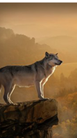 Help Protect The Wolves with this Cell Protector