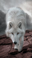 Help Protect The Wolves with this Cell Protector - Protect The Wolves