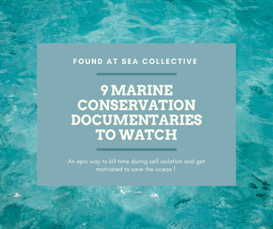 9 Marine Conservation Documentaries to Watch During Self Isolation