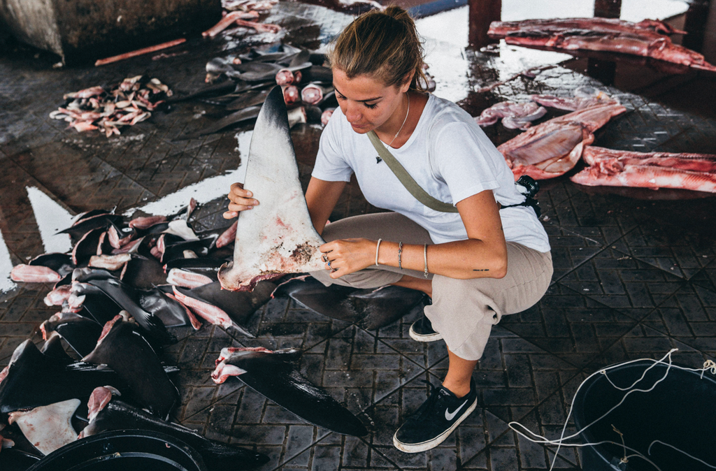 6 Ways You Can Help Save Sharks