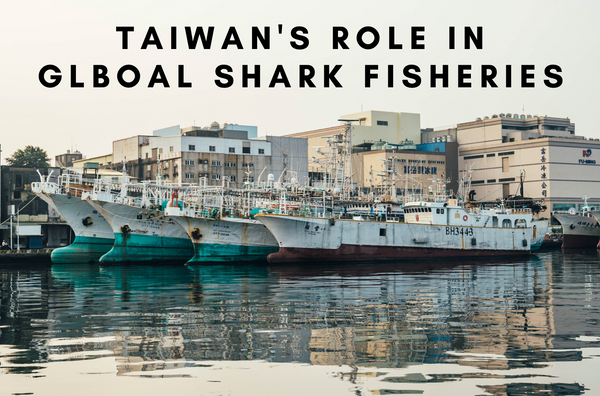 Taiwan's Role in Global Shark Fisheries