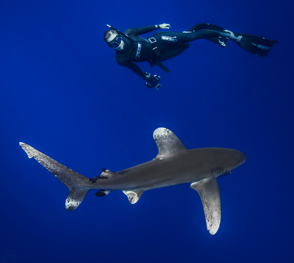 Kayleigh Grant dives with an Oceanic White Tip shark