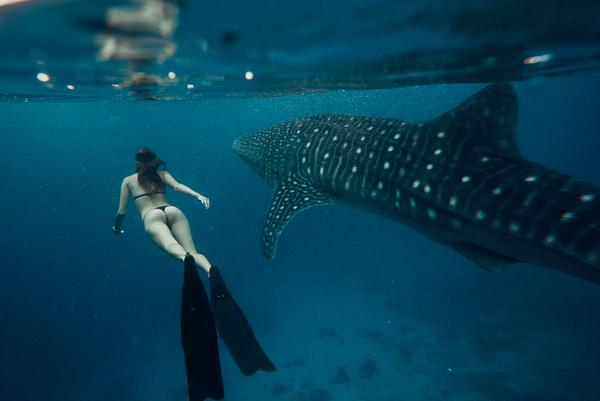 Girl swimming next to a whale shark