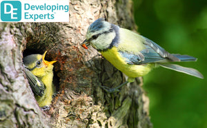 DevExp: Know where birds live and what they need