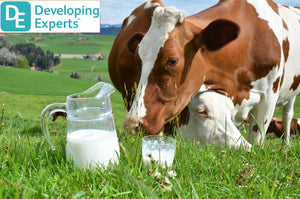 DevExp: Learn about cows and milk