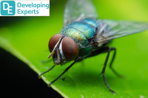 DevExp: Learn about insects and invertebrates 1