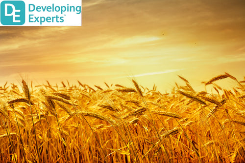 DevExp: Learn about wheat & flour (Chinese New Yr)