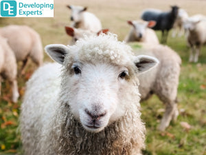 DevExp: Understand the usefulness of wool