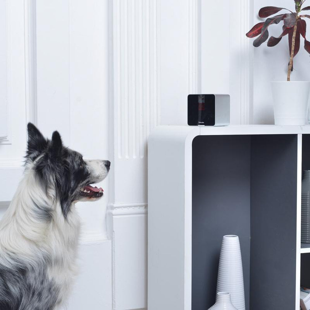 PET CUBE Wireless Pet Monitor System