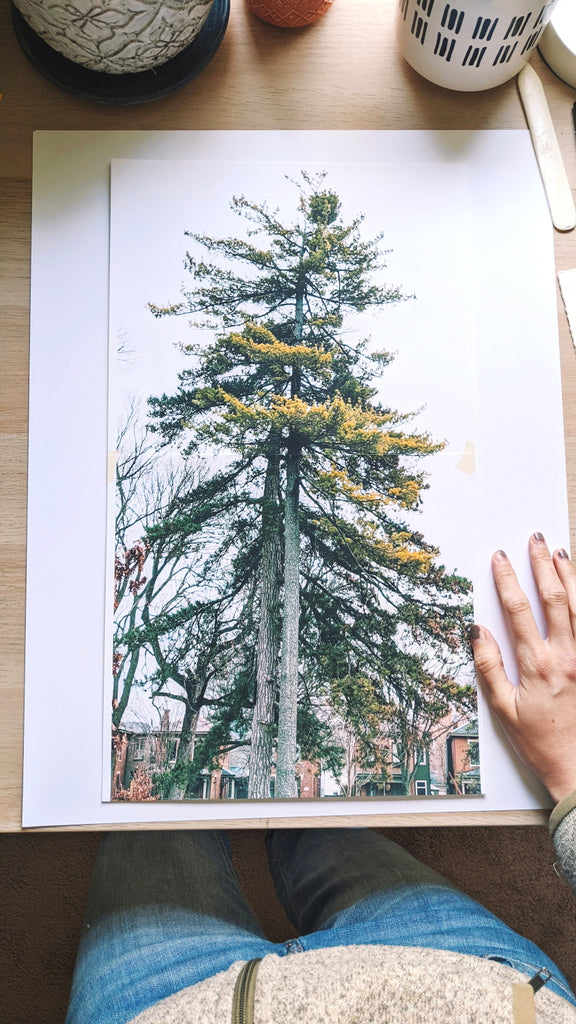 The reference picture of the trees