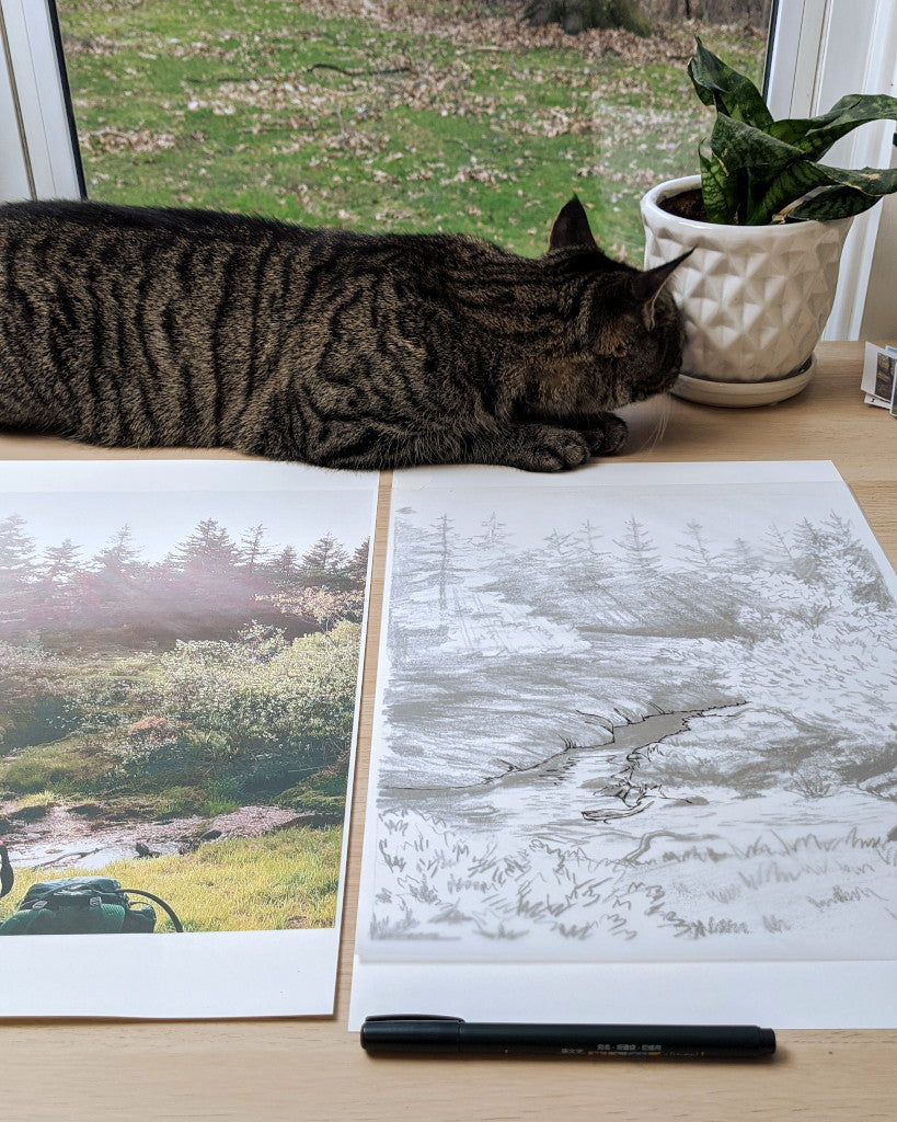 landscape sketch and cat
