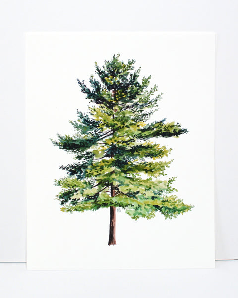 spruce tree fine art print product page
