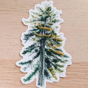 Pair of Pines - vinyl sticker - Kim Everhard Art