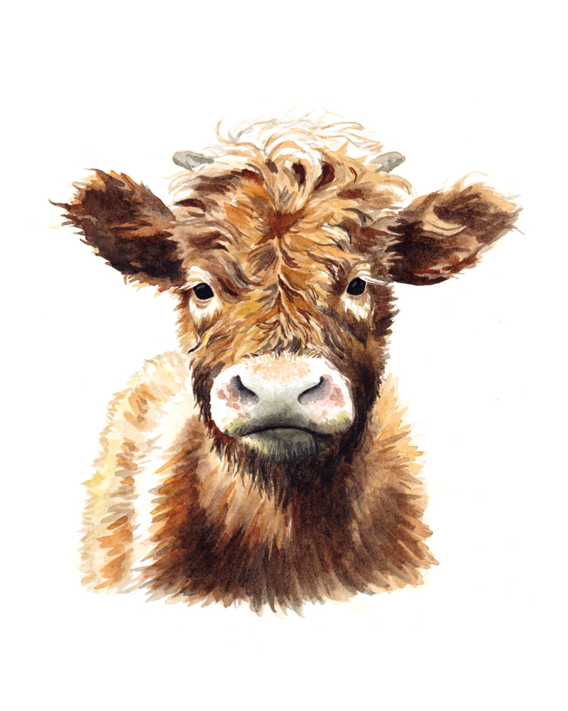 Original watercolor Shaggy Cow