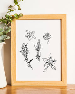 Colorado Wildflowers - Black and White Print - Limited Edition - Kim Everhard Art