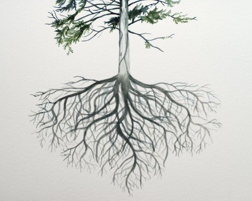 Let's Go Where the Pine Trees Grow- watercolor painting