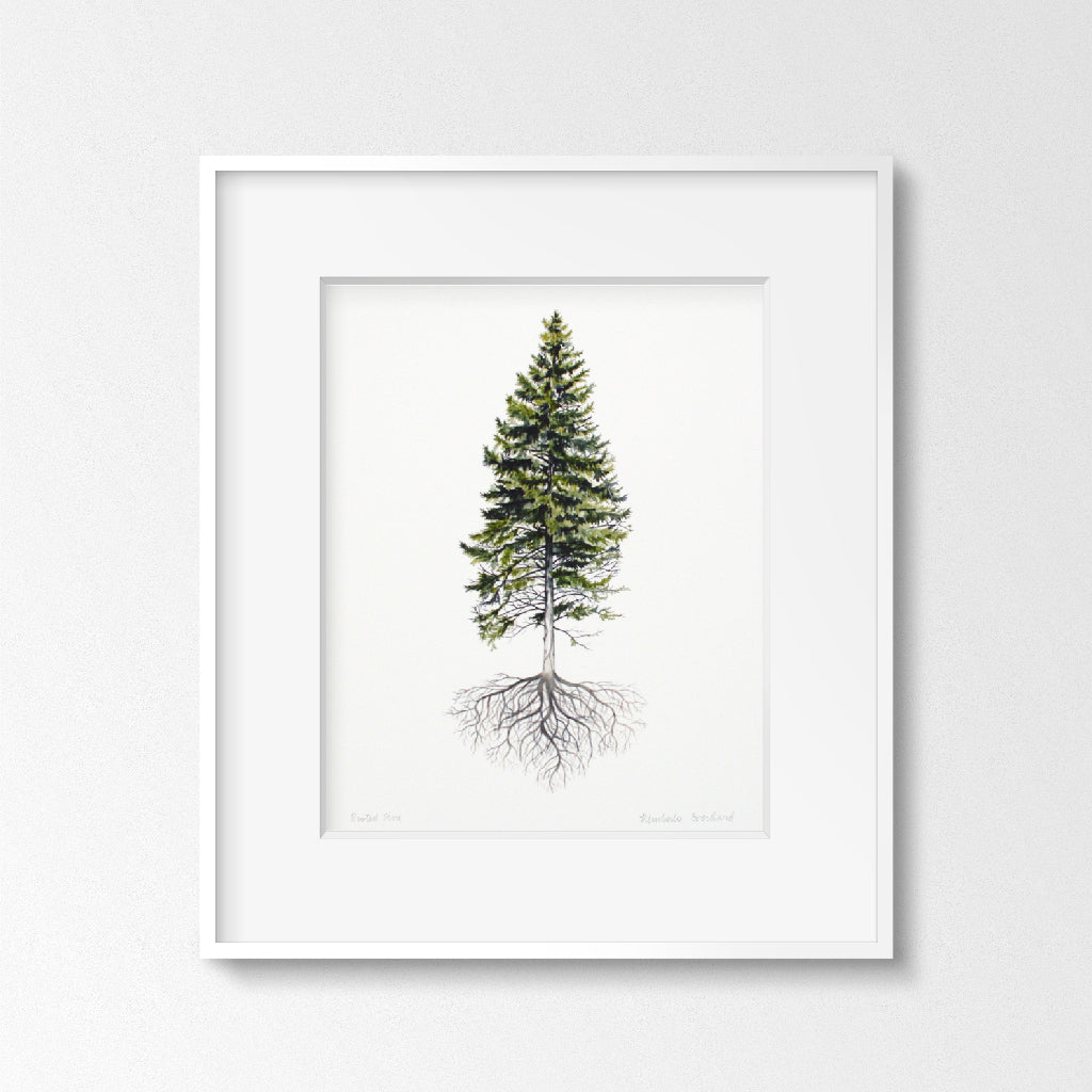 Rooted Pine Tree - Art Print - Everhard Designs Nature Art