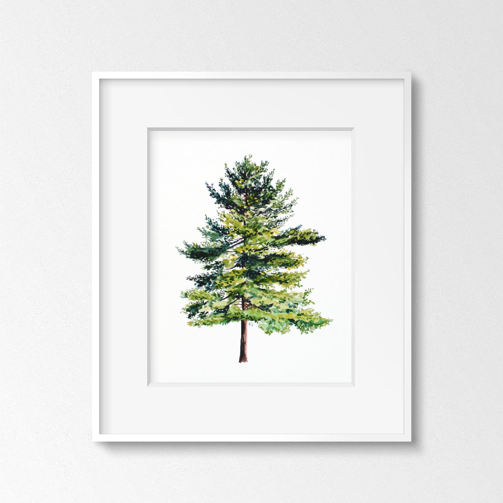 Spruce Tree - Art Print 8 x 10 - Everhard Designs Nature Art