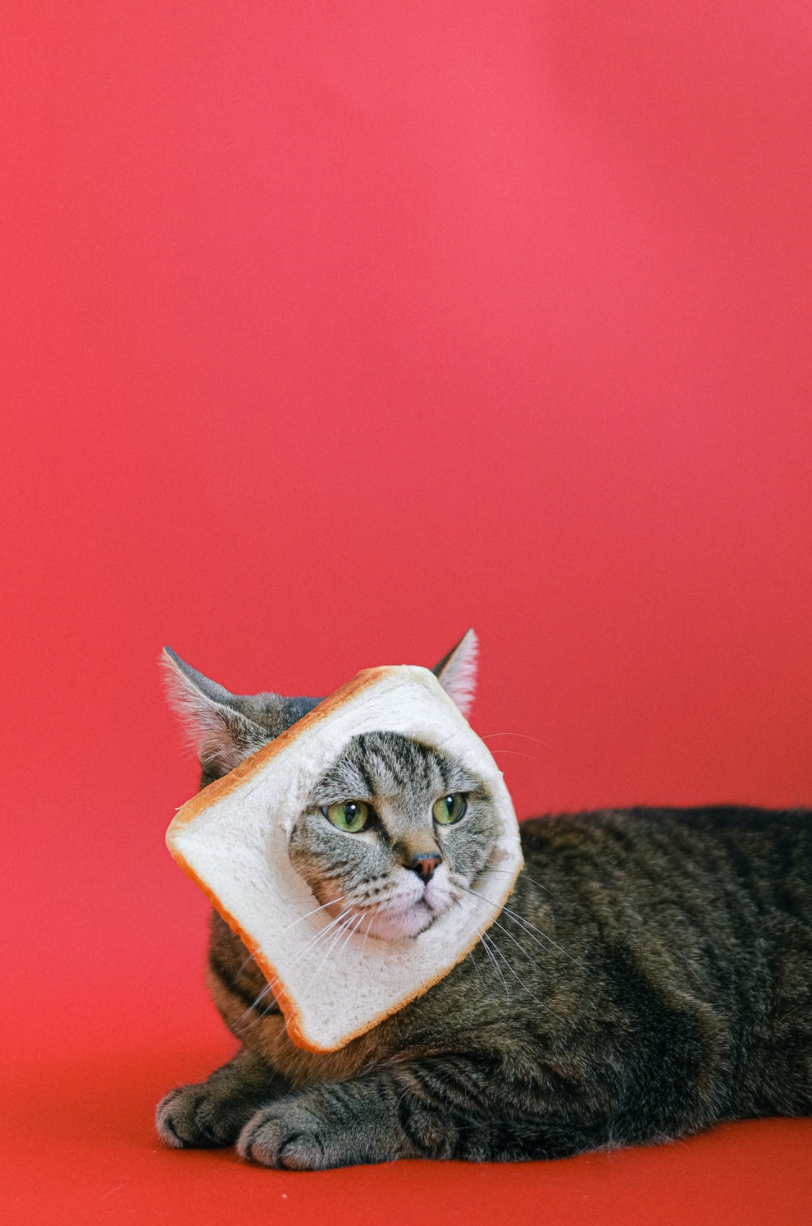 5 Human Foods Your Cat Can Eat