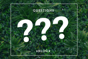 Top 5 Questions asked about Artificial plant walls