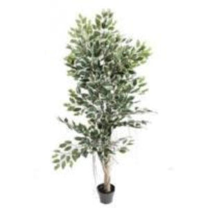 Ficus Tree - Artificial Plants | Forever Green