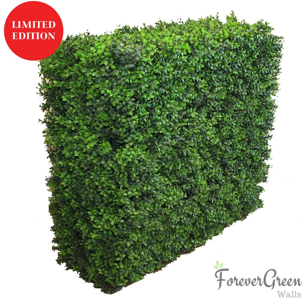 Artificial Portable Hedges | Forever Green Walls Wintergreen Buxus